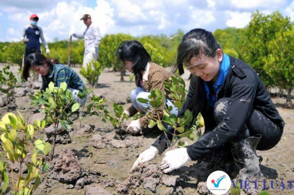 Thành lập công ty kinh doanh trồng rừng và chăm sóc rừng năm 2021